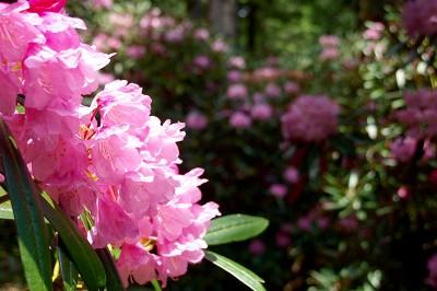 護摩壇山森林公園